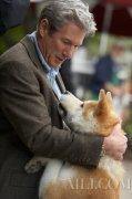 《一条狗的使命2》忠诚和守护是